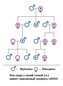 Порно на русском языке- XVIDEOSCOM